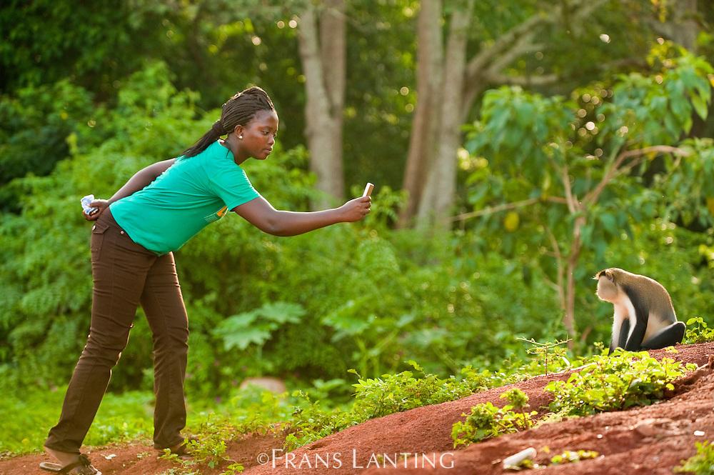 Local tourist photographing Mona monkey, Cercopithecus mona, Boabeng-Fiema Monkey Sanctuary, Ghana