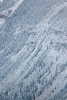 Fresh dusting of snow on avalanche slopes of the Purcell Mountains British Columbia Canada