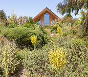 Royal Horticultural Society gardens at Hyde Hall, Essex, England, UK - the Dry garden