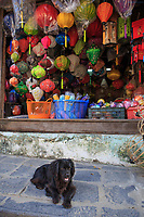A pet dog in front of a small shop selling lanterns in the old town of Hoi An, VIetnam