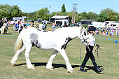 05 - Inhand Veteran Horse or Owner