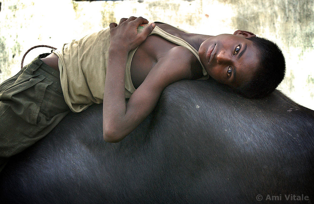 SITAMARHI, BIHAR: AUGUST 13:Mukash lies on the back of a water buffalo watching  as girls play games outside  a Mahila Shikshan Kendra, translated as Women's Education Center, in Sitamarhi, north of Patna in Bihar, India August 13, 2003. Bihar is the poorest state in India and women suffer  greatly because of the poverty, lack of education and opportunities. This center is being funded by the World Bank although it was initially started by Unicef (Ami Vitale)