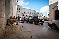 """Siamo in Puglia, a Specchia cittadina della provincia di Lecce, situato a circa 60 Km a sud del capoluogo di provincia..Si presenta come un paese tranquillo ma vivo..Le strade luminose e pulite presentano una pavimentazione a lastroni antichi..Il centro storico è un'area pedonale ed è spesso scenario di manifestazioni sacre e culturali..La gente è gentile ed ospitale e si è lasciata fotografare con tranquillità, facendosi riprendere nel loro fare quotidiano, quasi fosse abituata ad essere fotografata..Quest'area del Salento è meta di un turismo alla ricerca della tranquillità e della cultura; cultura intesa anche come eno-gastronomia, e soprattutto cultura volta al rispetto della natura..I turisti in cerca di aria sana, pulita, vengono nei paesini dell'entroterra salentino, lontani dalla città e dallo smog..Appena entrati in paese ci si ritrova una piazzetta moderna, molto ben concepita architettonicamente, sulla quale si affacciano anche palazzi di età più antica, probabilmente dell'inizio del '900...Arrivato nella piazza storica del paese """"La piazza del popolo"""" mi accolgono con i loro teneri sguardi i cani randagi """" guardiani della chiesa madre"""" e anche loro, forse in accordo con la gente del posto, si lasciano fotografare mentre si spalmano sul marciapiede o si stiracchiano prima di venirmi incontro pretendendo coccole."""