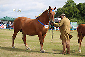 Class 03 & 11 - Filly or Gelding Shires & Brood Mare Suffolk