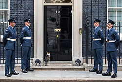 © Licensed to London News Pictures. 23/05/2018. London, UK. Larry, the Downing Street cat sits on the doorstep of 10 Downing Street as members of the RAF stand guard as part of the RAF100 Centenary celebrations. Photo credit: Rob Pinney/LNP