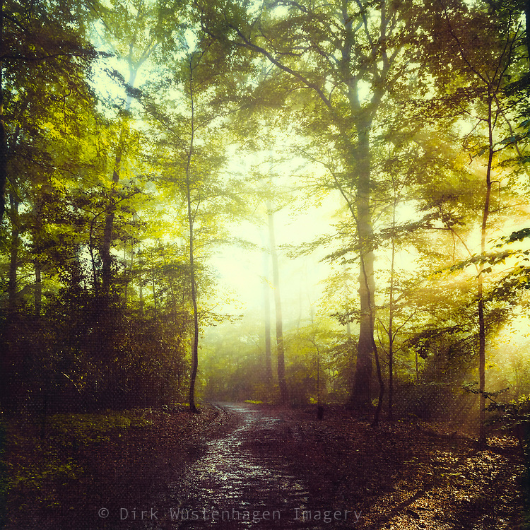 Decidouos wood after a summer rain - textured photograph<br />