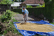 A woman dries rice on the side of the road in Canggu.