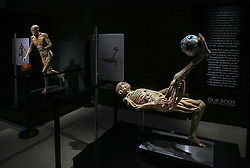 October 20, 2016 - Florida, U.S. - Two human bodies interacting with sports balls are a part of the South Florida Science Center and Aquarium's new exhibit called Our Body: The Universe Within, Thursday, October 20, 2016. Museum officials say the exhibit literally ''goes under the skin'' to reveal mysteries and inner workings of the human body. Damon Higgins / The Palm Beach Post (Credit Image: © Damon Higgins/The Palm Beach Post via ZUMA Wire)