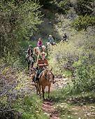 2015  Horses Landscape
