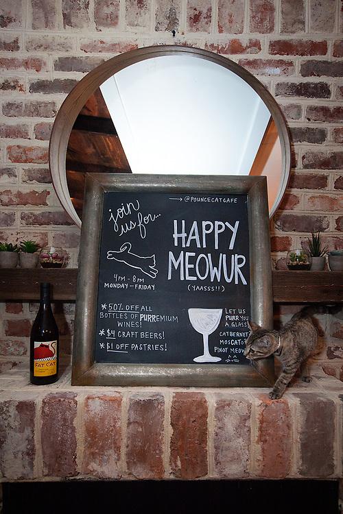 Pounce Cat Cafe & Wine Bar