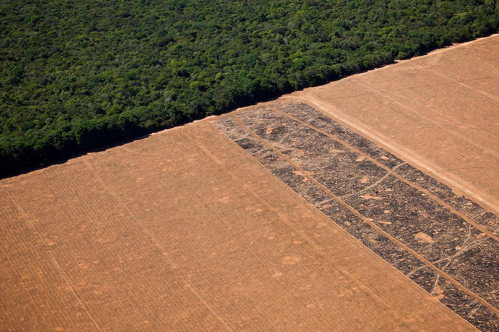 Fazenda Dois Americanos (cattle farm), Mato Grosso, Brazil, August 7, 2008. Daniel Beltra/Greenpeace