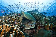 Diving Sipadan Island, Malaysia
