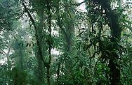 Cloud Forest Reserva Biologica Nuboso, Costa Rica