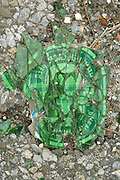 close up of a broken beer bottle on asphalt