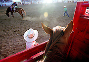 Horse and cowboy watch a bronc ride