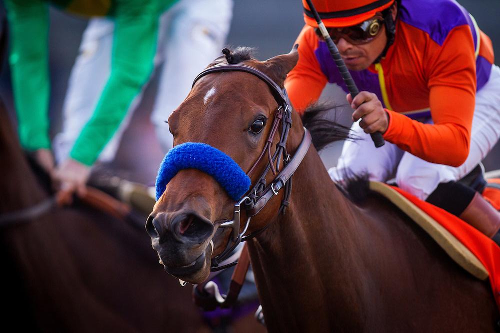 January 31 2015: Callback with jockey Martin Garcia up wins the Las Virgenes Stakes GI at Santa Anita Park in Arcadia CA. Alex Evers/ESW/CSM