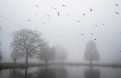 © Licensed to London News Pictures. 05/02/2020. London, UK. Gulls circle over the Boating Pond on a foggy morning in Bushy Park in south west London. Photo credit: Peter Macdiarmid/LNP
