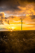 Sunset at the Sere Wind Farm