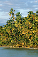 Cahuita National Park, Limon, Costa Rica.. <br />