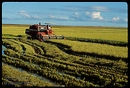 04: RICE FARM HARVEST 2
