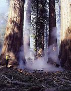 Falcon Press, Globe Pequot Press, California National Parks, Firefighter, Wildland Firefighters, Prescribed Fire, Wildland Fire, Forest Fire, Fire, Sequoia and Kings Canyon National Parks, California