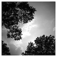 Tree tops and clouds in black and white
