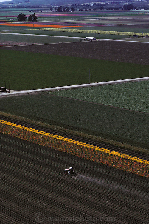 Aerial of a tractor cultivating rows of flowers in Lompoc, California.