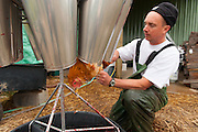 "Matt Schwab places chickens into a steel cone that holds the birds and then using a sharp straight razor, slits a vein in the bird's neck draining the blood. The birds do not seem to suffer as the gradual blood loss renders them unconscious.  Small family farmers Matt and Jen Schwab operate ""Inspiration Plantation"" an organic farm outside of Ridgefield, Washington. The couple raises and harvests their own heritage chickens, and seasonally inviting their customers in the community to visit their farm and help with the poultry harvest. Once the birds are killed, they're placed in a bath of near boiling water to loosen the feathers and then rotated in a washing machine-like tub with rubber appendages that pull the feathers out. Visiting helpers can participate in every step of the process and receive a fresh chicken for their efforts."