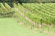 Wijn in Nederland