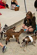 A womanl feeds goat kids at The Farm, Door County, Wisconsin, USA