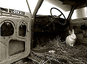 Bratislava,Slovakia (28/10/2006).Interiorof an old car that is the home to Jano's rabbits..Jano 66 lives on the edge of the city and makes his living selling scrap metal.   .**Heavy Metal Lifestyle