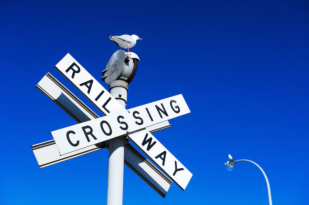 Seagull on railway crossing signage