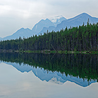 Beautiful reflection of the mountains and trees in Herbert Lake, AB located just outside of Lake Louise along the Icefields Parkway.