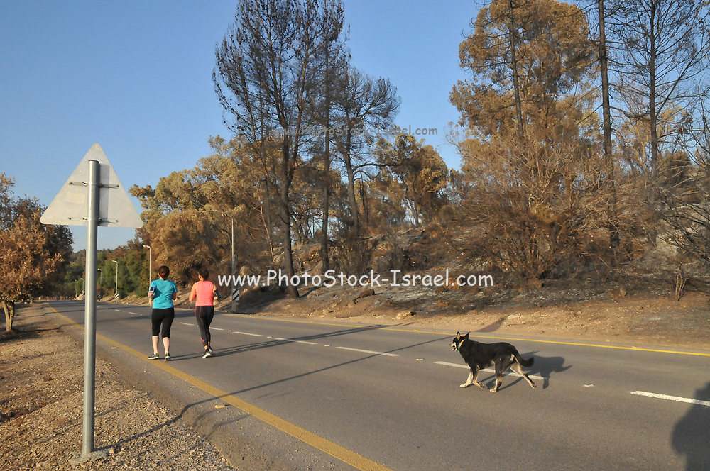 Two woman jogging on a rural road