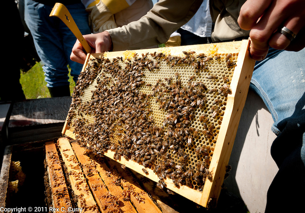Blake Shook shows students in he and John Talbert's beekeeping class a frame of honey bees at his Sabine Creek Honey Farm in Royce City on May 7, 2011...