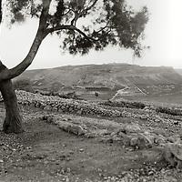 Shephelah