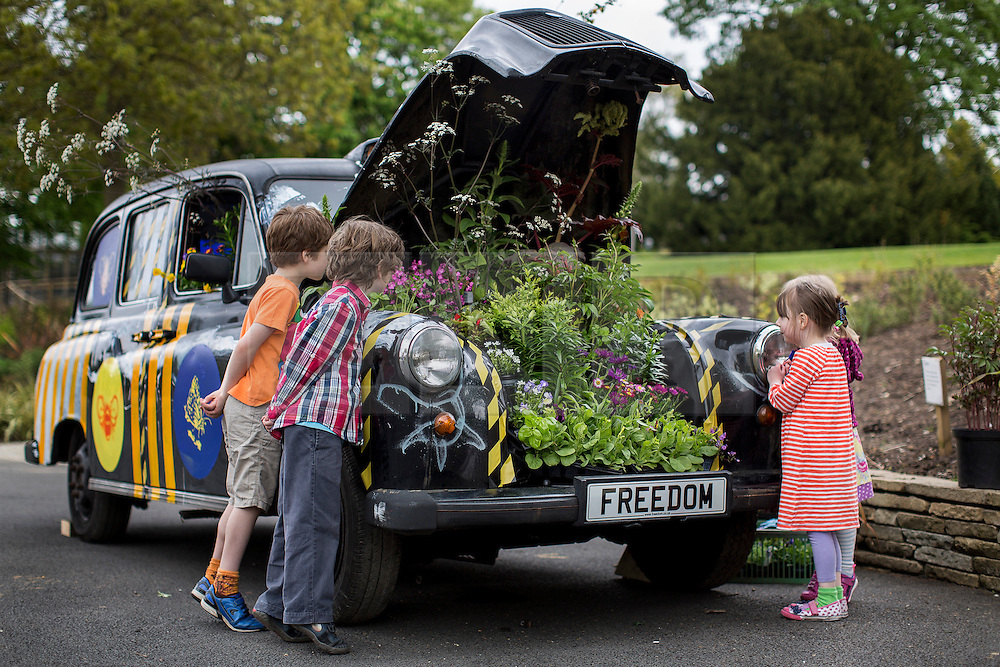 © licensed to London News Pictures. London, UK 17/05/2013. Children looking at a traditional black cab transformed into garden at the Horniman Museum. Artwork made by artist Adele Howitt, by ripping out engine and passenger compartments she creates a garden for bees. Car-Garden project aims to highlight the plight of the UK's bee population and promote the need for urban 'buffer zones' to encourage wildlife. The artwork will be exhibited at the Chelsea Fringe Festival. Photo credit: Tolga Akmen/LNP