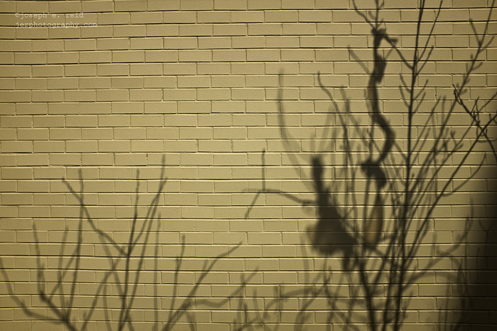 Shadows of bare tree branches on beige brick wall, New York, NY, US