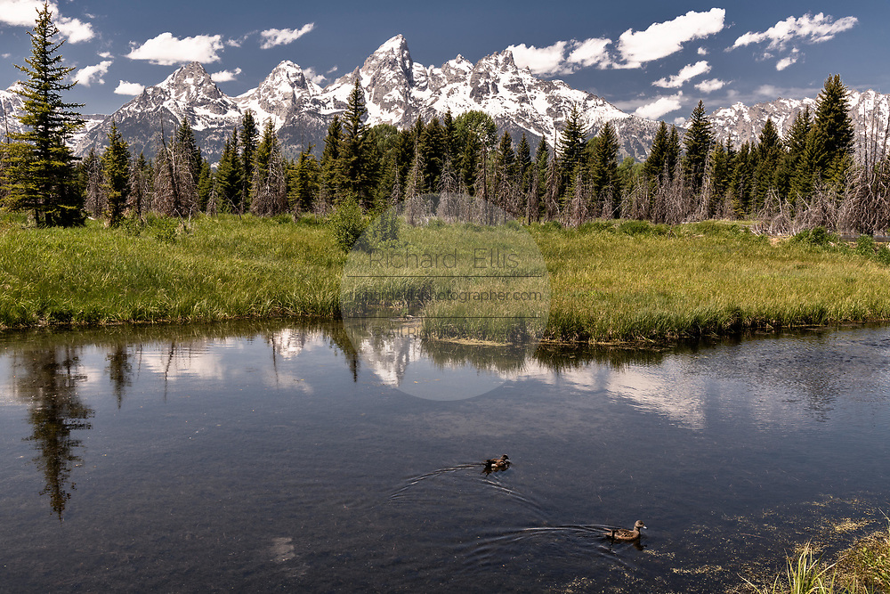 Mount Moran and the Grand Teton mountains reflected on the Snake River at Schwabacher Landing in the Grand Teton National Park in Moose, Wyoming.