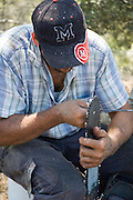 Israel, Carmel Forest, Foresters working in a natural forest, cutting down trees to thin out the forest. Forester fixing his powersaw