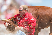 Steer wrestler Hunter Cure grabs his steer by the horns during the Steer Wrestling finals at the Cheyenne Frontier Days rodeo in Frontier Park Arena July 26, 2015 in Cheyenne, Wyoming. Eldridge went on to win second place.