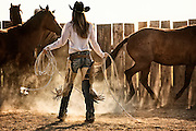Cowgirl Catching a Horse