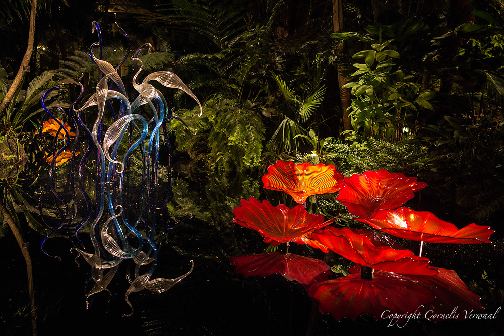 """""""Persian Pond and Fiori"""" by Dale Chihuly.  The brightly colored forms of Persians resemble whimsical water lily leaves floating on the surface of the water. Individual pieces ranging from 19 to 36 inches in diameter are massed together to make a striking installation evocative of Chihuly's vision of a fantasy garden. Persians were developed using a technique Chihuly had learned at the centuries-old Venini workshop in Venice, in which a special mold, or """"wrap,"""" is used to create an undulating pattern on the surface of the glass. Over time, these forms have been displayed individually and in groups in gallery and garden settings, and even massed together in arrangements on walls and high overhead, continually subverting the expectations of the viewer."""