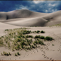 Sand dunes with green grass