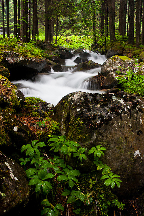 Near Passo San Pellegrino, a mountain stream rushes by in the woods. Streams like this are fed by the snowmelt in the mountains and by the late spring rains.