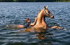 Schwimmen mit Pferden