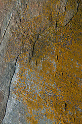 Rock Face with Lichen, Lower Negro Island, Castine, Maine, US
