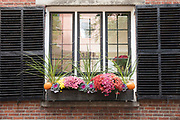 Floral window box planter at window with shutters in the Beacon Hill historic district of Boston, Massachusetts, USA