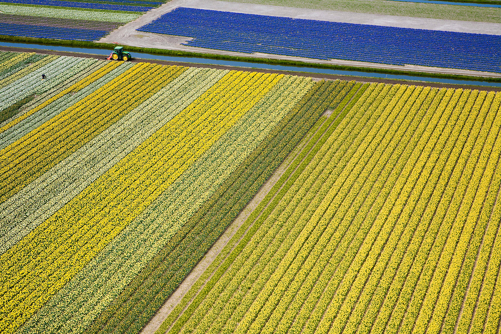 Nederland, Zuid-Holland, Hillegom, 16-04-2008; bollenstreek, percelen met bollen, gedeeltelijk in  bloei (narcissen en hyacinten); zandgrond, bollenveld, geestgrond, bloementeelt, bollenteelt, narcis, bol, hyacint*, patroon,ritme, kleur, abstract; aerial photo, bulbs, flower bulb, flowerbed , bulbfields, bloom, flowering time, toerism, attraction;.flowering fields,bulbs, flower bulb, flowerbed, bulbfields, bloom,flower, flowering time, toerism,tulips, daffodils, hyacinths, fields, horticulture, flowerbulb, colour, color...  .luchtfoto (toeslag); aerial photo (additional fee required); .foto Siebe Swart / photo Siebe Swart