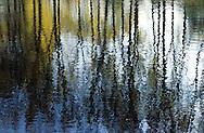 DEU, Germany, reflections at a lake at the water meadows of the river Sieg north of the city of Bonn.....DEU, Deutschland, Reflexionen auf einem See in den Siegauen noerdlich von Bonn.